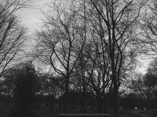 silent trees (1)